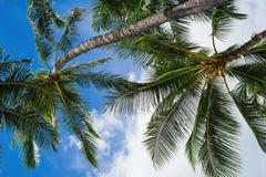 Debajo de las palmeras imagen de archivo libre de regalías