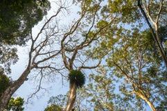 Debajo de los árboles de la selva en el parque nacional de Periyar, la India imagen de archivo libre de regalías