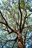 Debajo de Sunny Tree Fotos de archivo libres de regalías