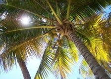 Debajo de una palmera Imagen de archivo