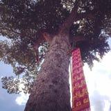 Debajo del árbol imágenes de archivo libres de regalías