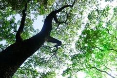 Debajo del árbol Foto de archivo