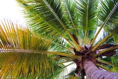 Debajo del árbol de coco en la playa Fotografía de archivo