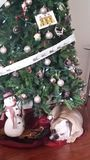 Debajo del árbol de navidad Imagenes de archivo