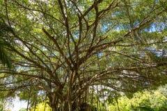Debajo del árbol grande Imagenes de archivo