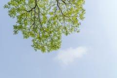 Debajo del árbol grande y con la rama magnifique imagen de archivo libre de regalías