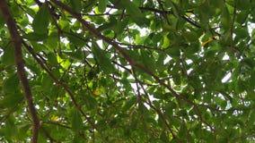 Debajo del árbol fotografía de archivo