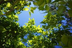 debajo del arbusto Fotografía de archivo