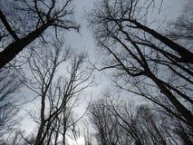 Debajo del cielo en el bosque oscuro profundo Foto de archivo