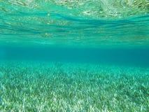 Debajo del mar Imagen de archivo