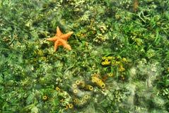 Debajo del mar Fotografía de archivo