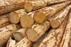 Debarked logs Royalty Free Stock Photo