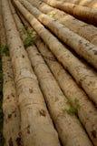 Debarked logs drying Stock Photos