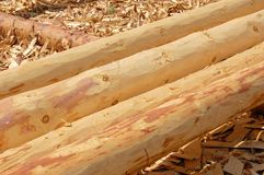 Debarked whole logs Stock Image