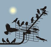 Debate crows. Black silhouettes of the crows on the television antenna Vector Illustration