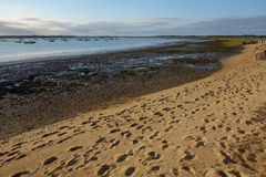 Debenestuarium Mudflats royalty-vrije stock foto's