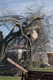 Debis Suspended in Destroyed Tree After Tornado Stock Photo