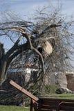 Debis verschob in zerstörtem Baum nach Tornado Stockfoto