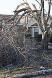 Debis verschob in zerstörtem Baum nach Tornado Lizenzfreie Stockfotografie