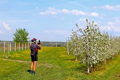 Debowiec, Poland - april 26, 2018: A cyclist takes a picture in a blooming apple orchard. Blooming apple plantation. A young orcha. Rd of modern line-up on a Stock Image
