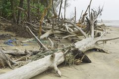 Debris Cayenne River, French Guiana royalty free stock photos
