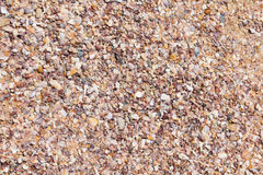 Debris shells Stock Photography
