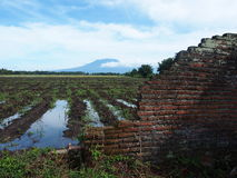 The Debris Wall and Irrigated Paddy Field With the Volcano in the Background. Panorama of irrigated (watered) rice paddy field in Java, Indonesia. Old ruined Royalty Free Stock Photos