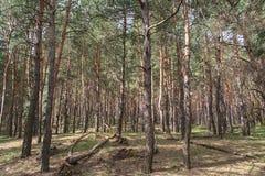 Debrowski der Wald Lizenzfreie Stockbilder
