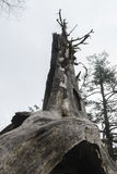 Decayed tree Stock Images