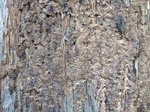 Decadimento di legno Fotografia Stock