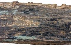 Decaimiento de madera de la madera aislado en el fondo blanco Foto de archivo libre de regalías