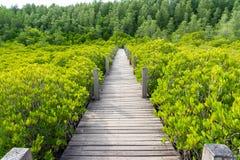 Decandra Ceriops леса мангровы также известное как золотые назначения Prong луга Rayong, Таиланда естественный бечевник стоковое фото