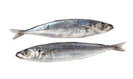 Decapterus Fish stock image