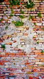 Decay brick wall and plant in Burano Stock Photo