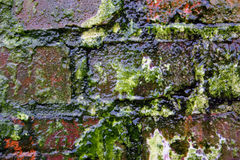 Decay colors 2. Decayed old brick wall with some moss spread on it - zoom in royalty free stock photography