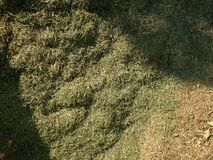 Decay harvested grass in big green smell mound in corner of garden.  Lactic fermentation Stock Photos