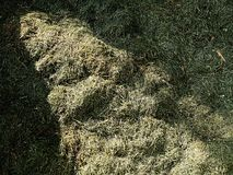 Decay harvested grass in big green smell mound in corner of garden.  Lactic fermentation Stock Images