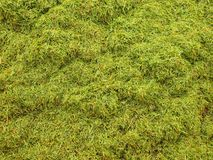 Decay harvested grass in big green terrible smell mound in far corner of garden. Royalty Free Stock Photography