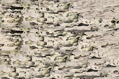Decay surface or corrosion Texture of a tree. Decay surface or corrosion Texture of a tree for the design background Stock Images