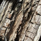 Decay wood surface Royalty Free Stock Image