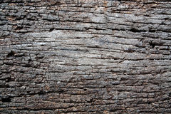 Decay wood Royalty Free Stock Image