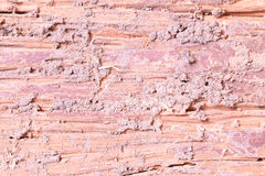 Decay wood texture Royalty Free Stock Photos