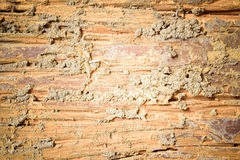 Decay wood texture. This a photo of Decay wood texture background Stock Photography