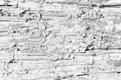 Decay wood texture Soft tone White color Royalty Free Stock Image