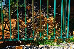 Decayed bush with yellow leaves stock photography