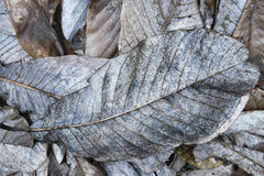 Free Decayed Fallen Leaves Royalty Free Stock Image - 54548036