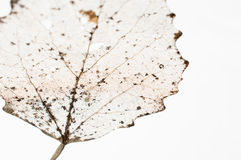 Decayed leaf abstract Stock Image