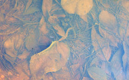 Decayed leaves under water Royalty Free Stock Images