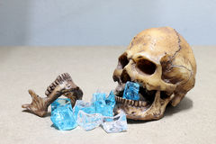 Decayed teeth human skull with candy on wood background. like a people eating candy too much. Royalty Free Stock Images