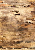 Decayed wood. A piece of wood rotting from water damage Stock Photography